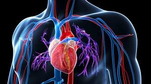 magas vérnyomás kezelése népi gyógymódokkal időseknél színes hipertónia